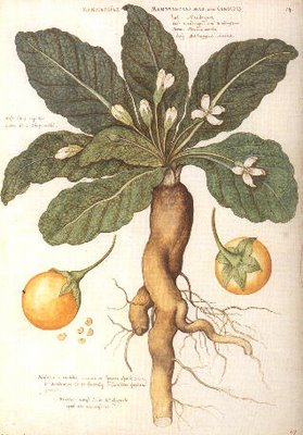 Byzantine herbs and drugs – the magical and dangerous mandrake ...